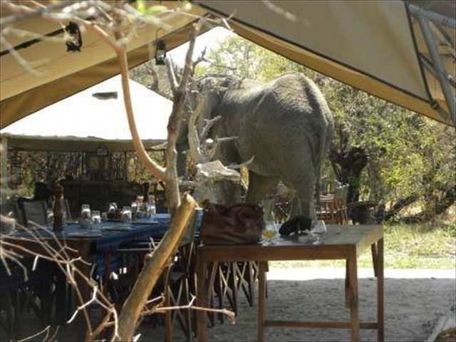 Elephant in the Camp