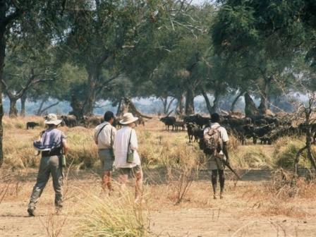Walking Safari at Pioneers Camp, Zambezi National Park near Victoria Falls, Zimbabwe