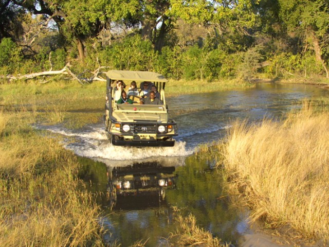 Game drive at Pom Pom Camp, Okavango Delta, Botswana
