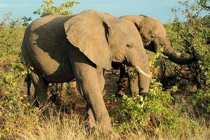 Presidential Elephant Herd