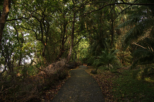 Pathway inside the Victoria Falls rainforest