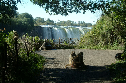 Barriers at the edge of the Victoria Falls rainforest -Zimbabwe