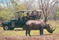 Rhino Encounter Victoria falls