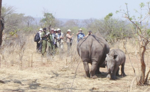 Rhino Walk in Mosi oa Tunya National Park near Victoria Falls, Zambia