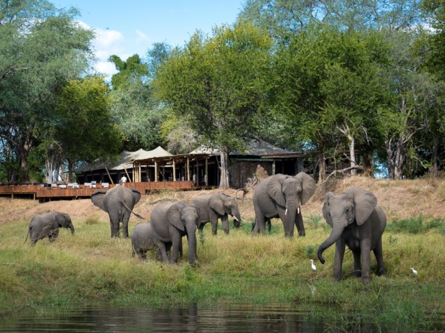 Elephants in front of main lodge at Ruckomechi Camp, Mana Pools