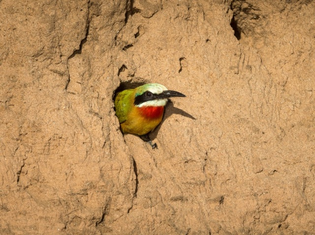 Birding safaris at Ruckomechi Camp - Mana Pools National Park, Zimbabwe