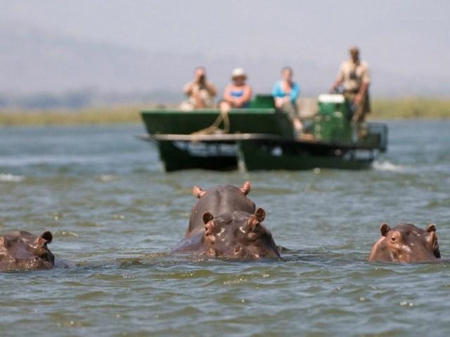 Ruckomechi Camp river cruise - Mana Pools National Park, Zimbabwe