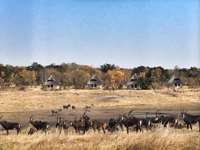 Sable Sands Lodge by Dete Vlei near Hwange National Park, Zimbabwe