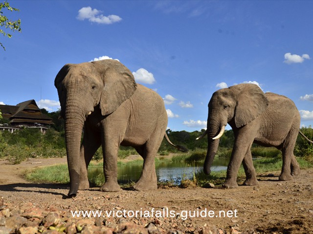 The waterhole at Victoria Falls Safari Lodge