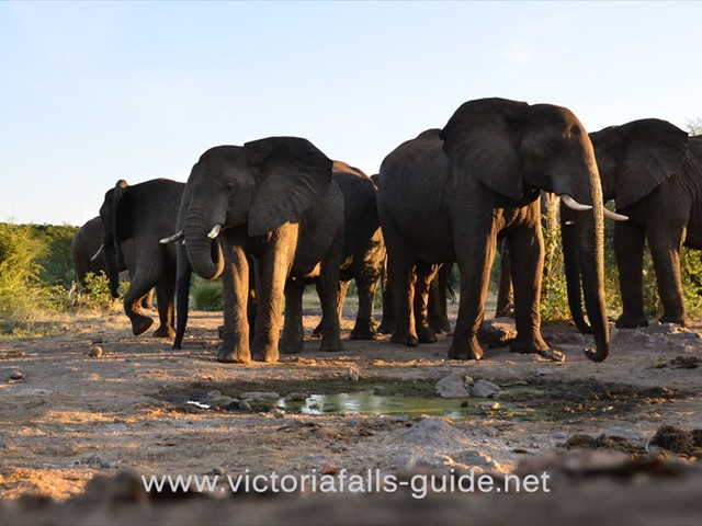 Whole herds of elephants can be seen