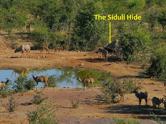 Location of the Siludi Hide