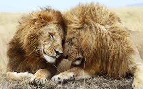 LOL LIONS
