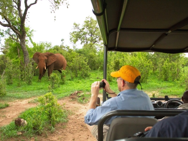 Elephant on a game drive at The Stanley & Livingstone reserve - Victoria Falls, Zimbabwe