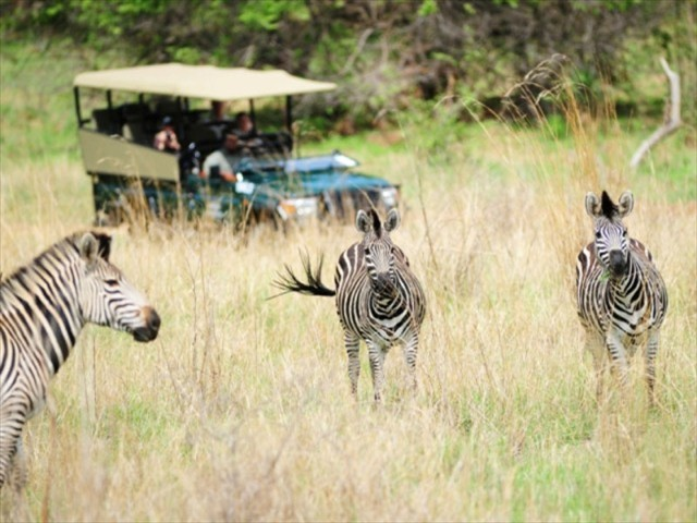 Game drives on the private reserve