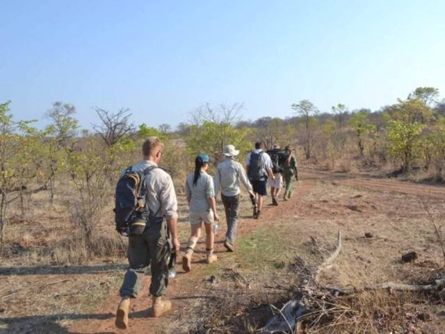 Walking safaris also available