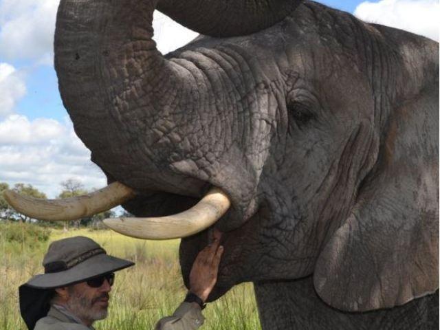 Elephant interaction on Chief's Island