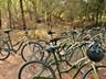 Bike tours around town