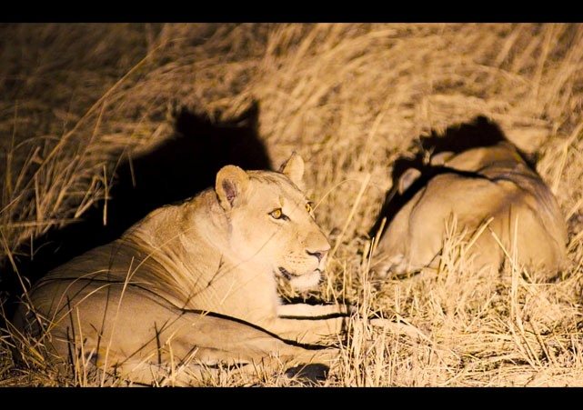Night drives at The Hide in Hwange National Park - Zimbabwe
