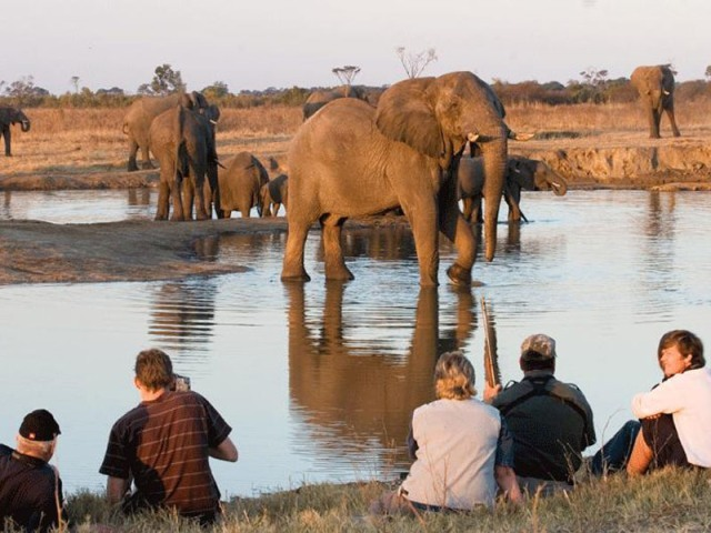 Guided walking safaris at The Hide in Hwange National Park - Zimbabwe