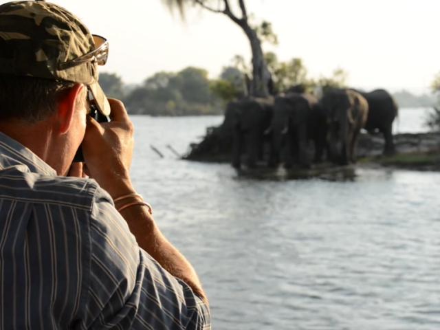 Elephants on a sunset cruise in Victoria Falls, Zimbabwe