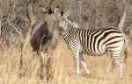 Exquisite wildlife
