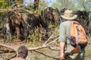 Walking safari in Victoria Falls