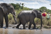Elephant encounter in Victoria Falls