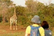 Walking safari in the Zambezi national park