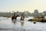 Horse back safari in Victoria Falls