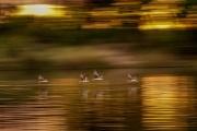 Birding safari on the Zambezi River, Victoria Falls, Zimbabwe