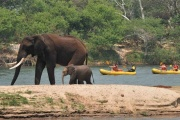 Upper Zambezi River canoe safari