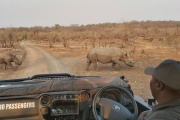 Rhino search game drive