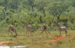 Guided safaris
