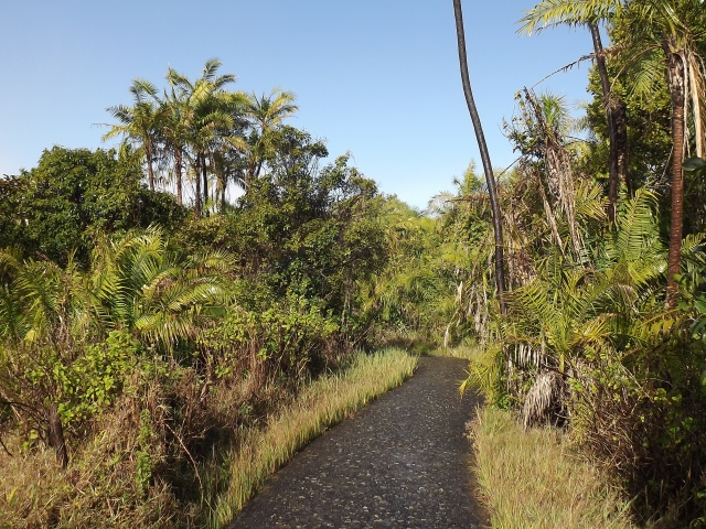 Walkway in the rainforest