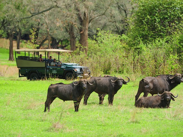 Game drives on the reserve