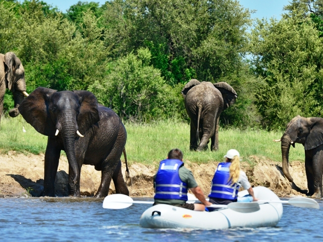 Canoeing safaris on the Zambezi River near Victoria Falls, Zimbabwe