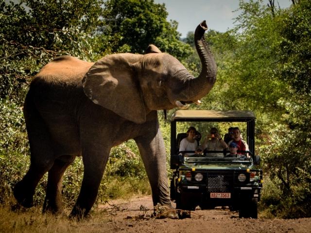Game drive in the Zambezi National Park near the mighty Victoria Falls, Zimbabwe