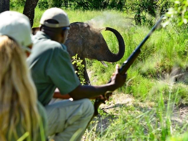 Bush walks in Zambezi National Park near Victoria Falls, Zimbabwe