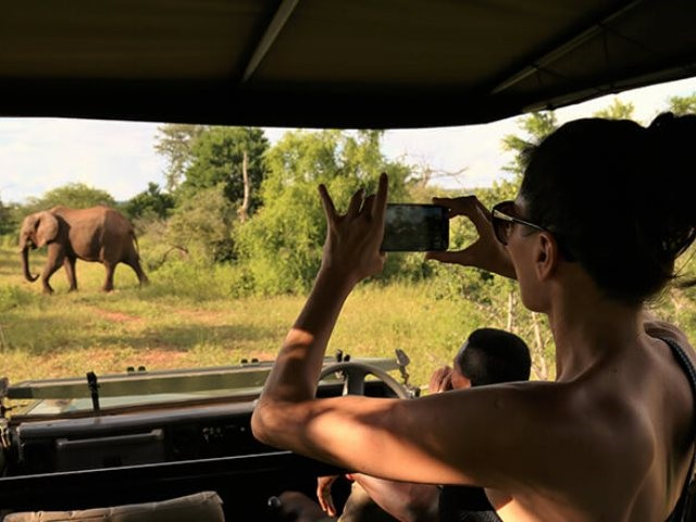 Include game drives