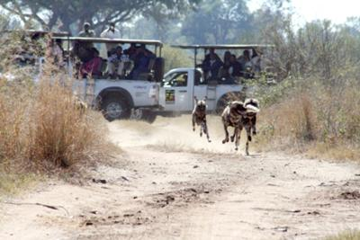 The Ukusuta Pack Run Wild on the Victoria Falls Private Game Reserve