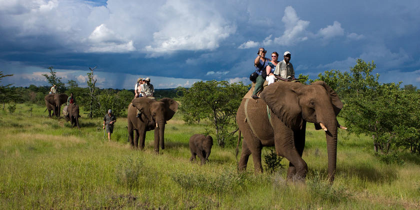 Safari on the largest land mammal