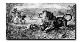 David Livingstone Lion attack