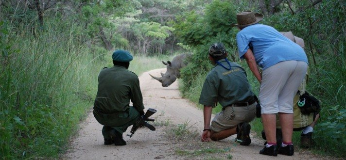 Search for the endangered rhino