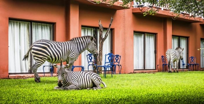 Outside the rooms, zebras are regulars