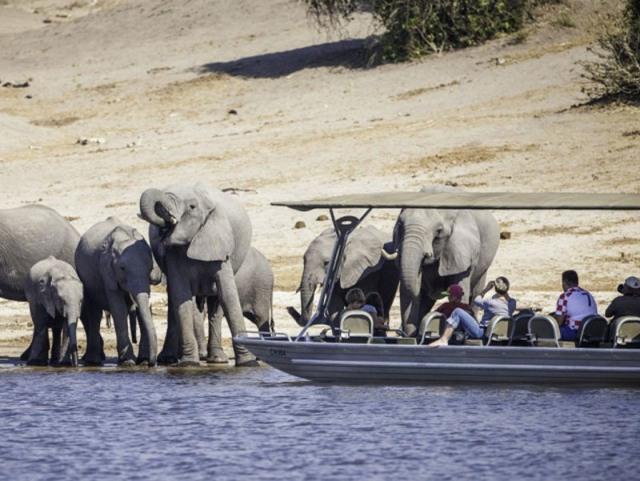 Cruising the Chobe River from Bakwena Lodge
