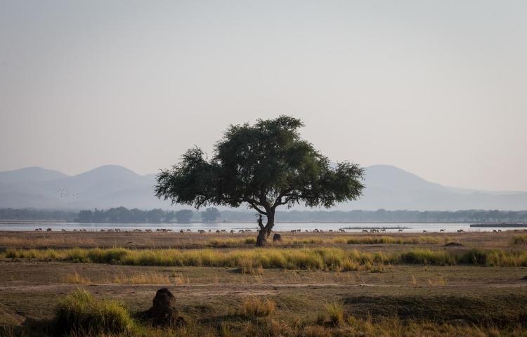 Views of the Zambezi River flood plains