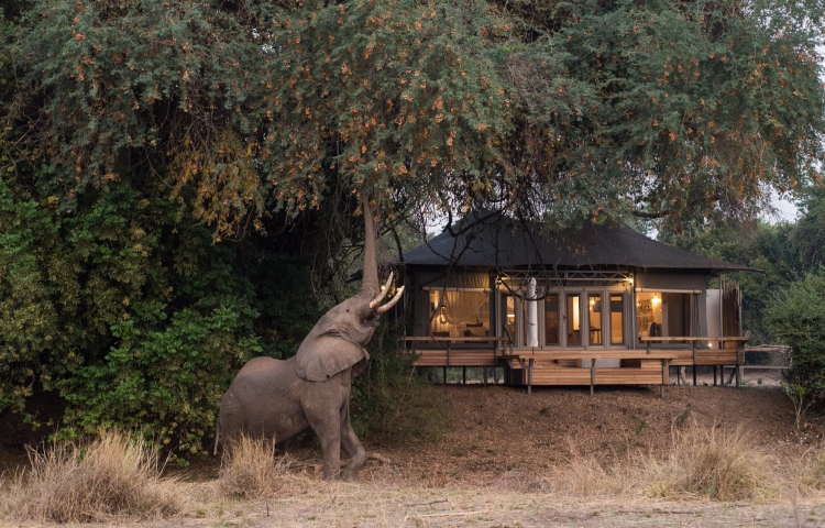 Luxury tented camp in the wilderness