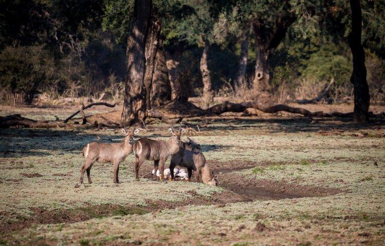 Variety of wildlife
