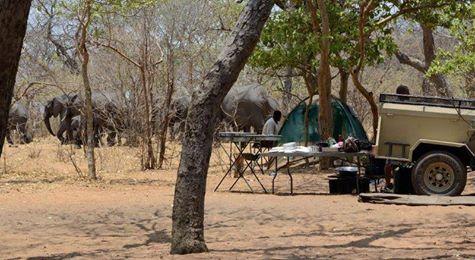Elephants by the campsite - Chobe National Park, Botswana