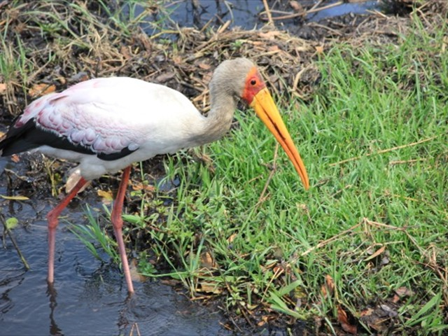 Birding safari in Victoria Falls